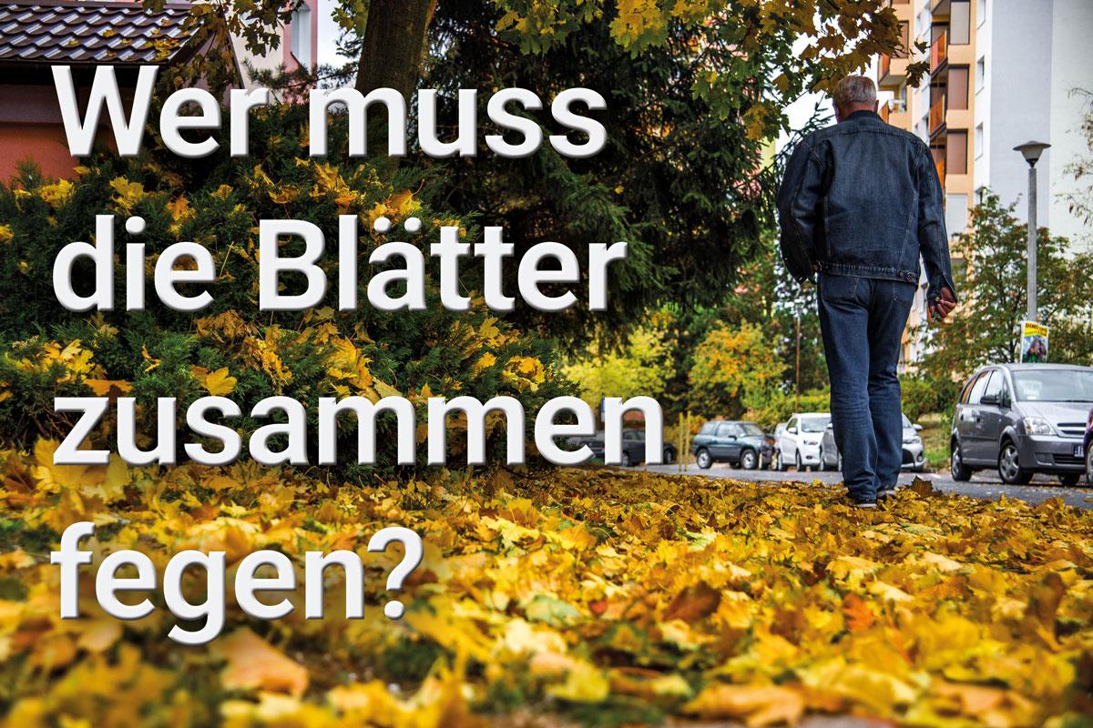 Laub - Wer muss die Blätter zusammen fegen?