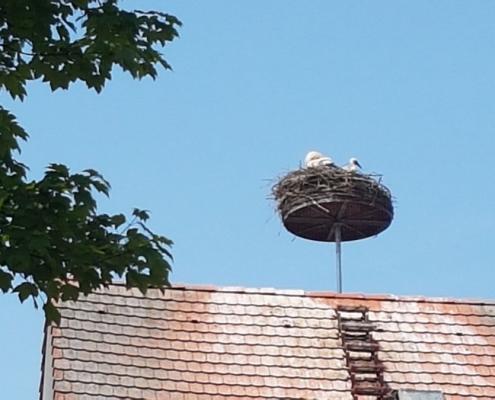 Storchennest auf der Zehntscheuer in Bad Dürrheim